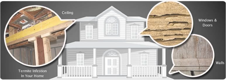 Termite graphic for termite control in Nashville, TN, Franklin, TN and Brentwood, TN, exterminators and bug sprayers for termite baiting and more.